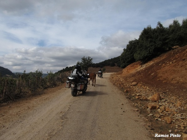 O Meu Zoom...de Marrocos, em 2014 - Página 2 IMG_5392_new_zpsd4623d6f