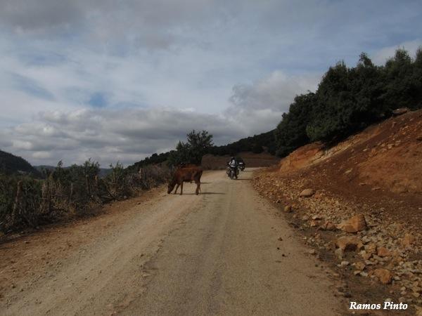 O Meu Zoom...de Marrocos, em 2014 - Página 2 IMG_5393_new_zpsf6c789e5