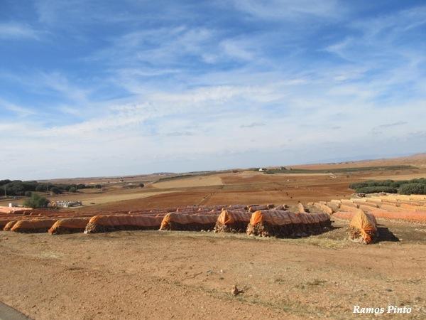 O Meu Zoom...de Marrocos, em 2014 - Página 2 IMG_5464_new_zpsb1058d6c