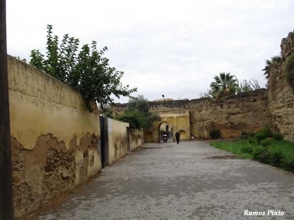 O Meu Zoom...de Marrocos, em 2014 - Página 2 IMG_5588_new_zps32151745