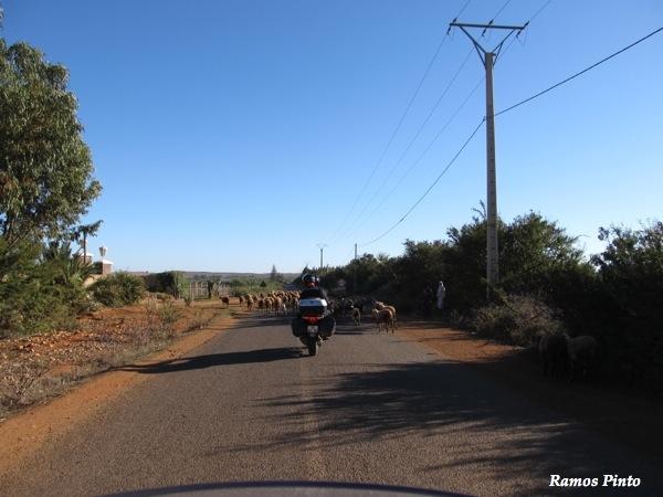 O Meu Zoom...de Marrocos, em 2014 - Página 2 IMG_5736_new_zpscdf46388