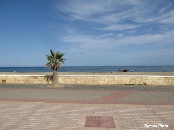 O Meu Zoom...de Marrocos, em 2014 - Página 2 IMG_5952_new_zps1e849b94