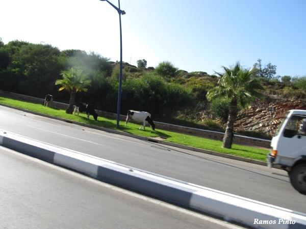 O Meu Zoom...de Marrocos, em 2014 - Página 2 IMG_5966_new_zps2943170e