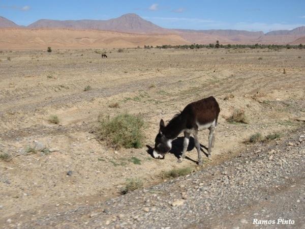 O Meu Zoom...de Marrocos, em 2014 - Página 2 Da02b957-1d92-4bd5-9e86-a9e8e72b1fbc_zpsb1122963