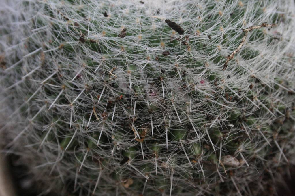A thread for your ugly cactus IMG_5750
