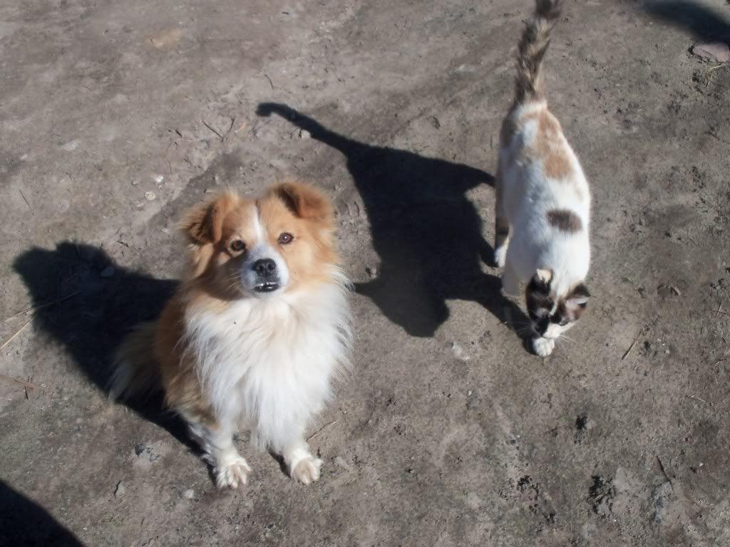 Pets 100_4254