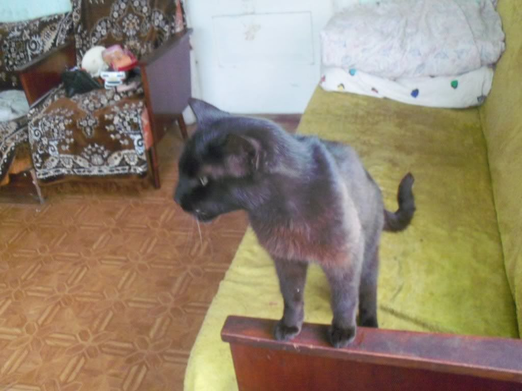 Pets 100_5292