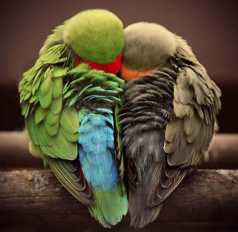Foto nga bota e kafsheve dhe zogjve  - Faqe 4 Bird-love-p2-15