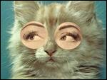 elina avatarid ~ uued 26.10  21-1