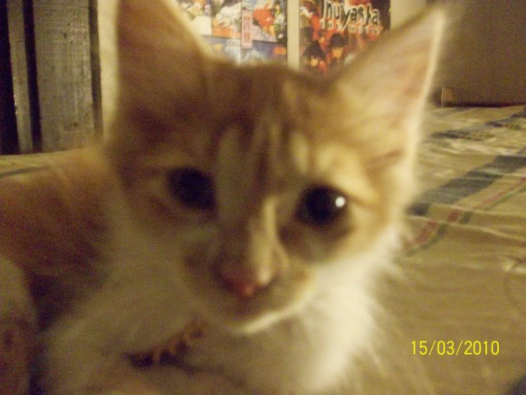 Tengo gato nuevo *¬*!!! 100_3149