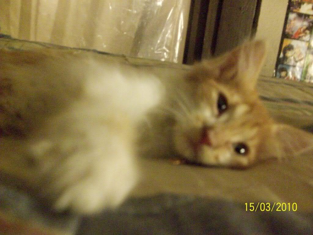 Tengo gato nuevo *¬*!!! 100_3158
