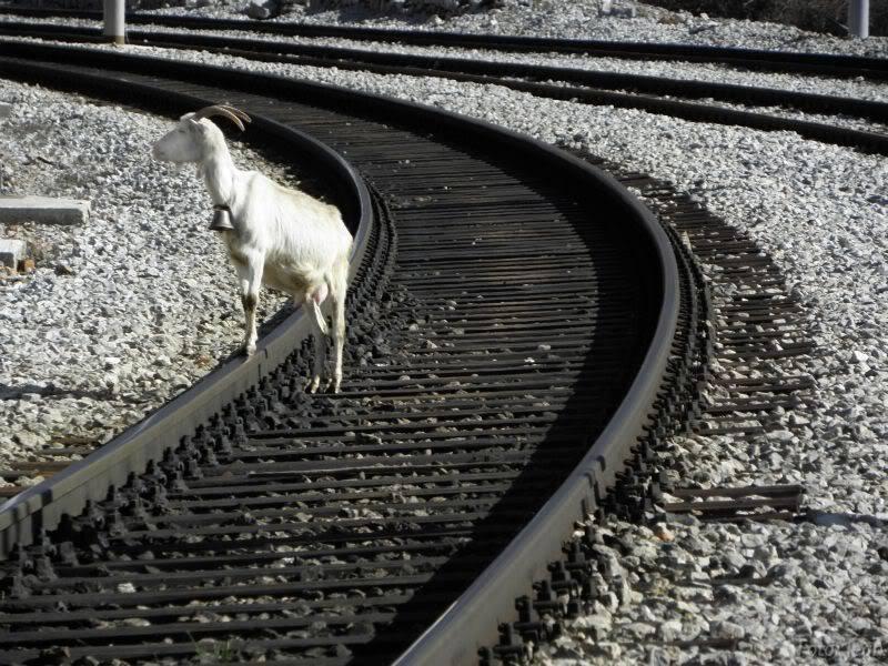 Željeznica i beštije P2270116