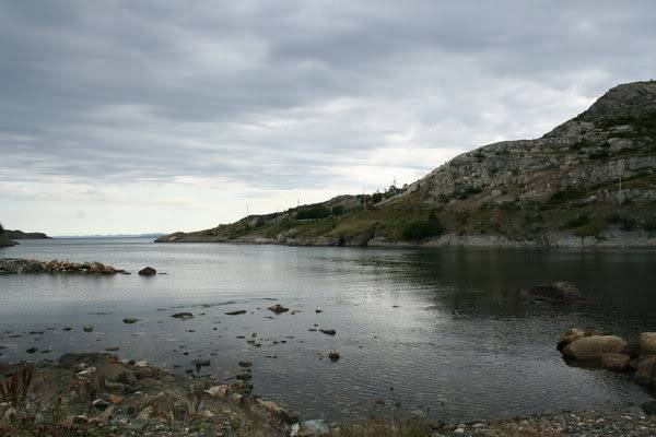 Purrty or awesome piccies! Newfoundland_by_izzabehr