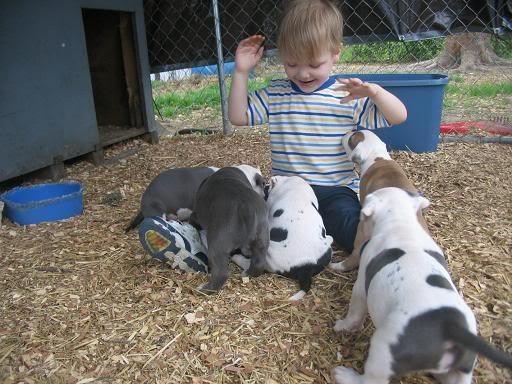 pics Puppies1