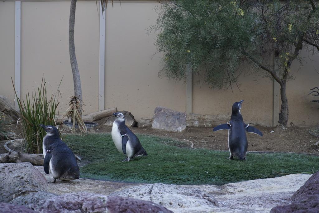 Gabriel & Family West Coast + Disneyland - Pagina 3 _DSC4899_zpskofwheo5