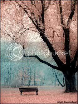 The Sakura Trees Sakuratree