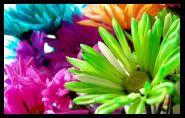 صور ستايل للماسنجر Love_in_rainbow_by_steamdreamer