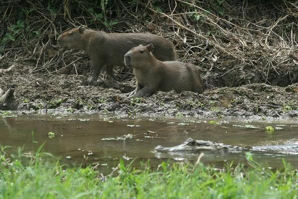 Rincones de mi patria, si se puede hacer turismo en Vzla 243559-Chiringuitos-and-kayman-0