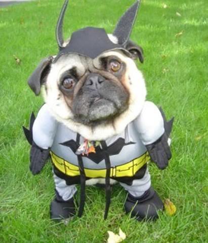 Contest for 483 Virgo - Page 5 Bat-pug