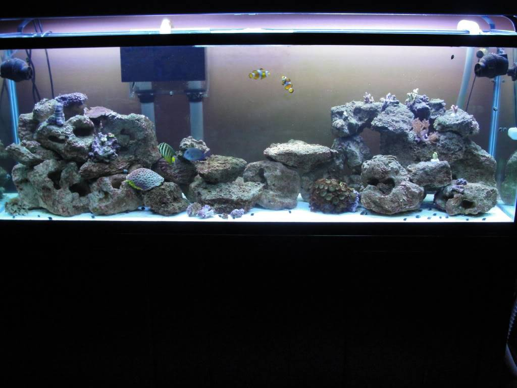 Here are some pics of my 135G Reef - Page 3 DSC00161