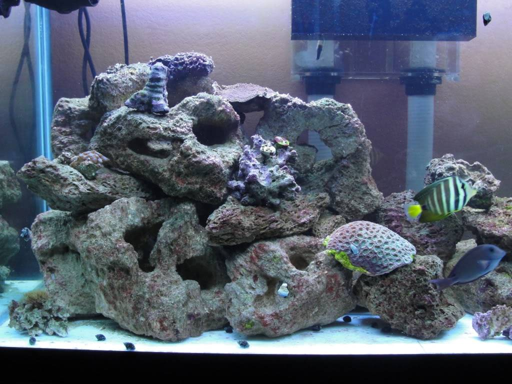 Here are some pics of my 135G Reef - Page 3 DSC00162
