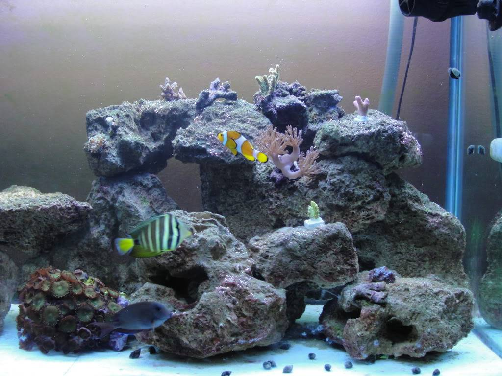 Here are some pics of my 135G Reef - Page 3 DSC00163