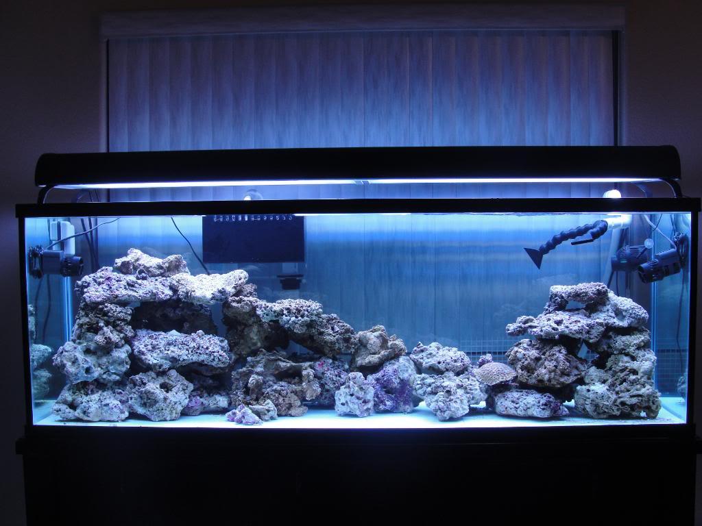 135 Gallon saltwater tank - Page 2 DSC00942