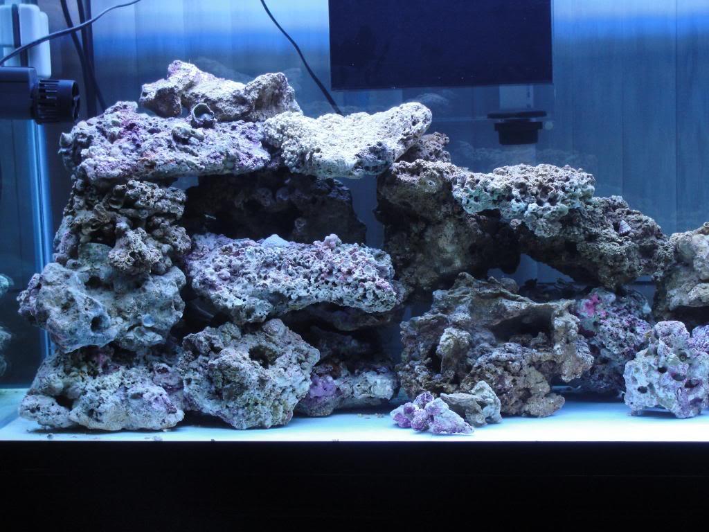 135 Gallon saltwater tank - Page 2 DSC00943