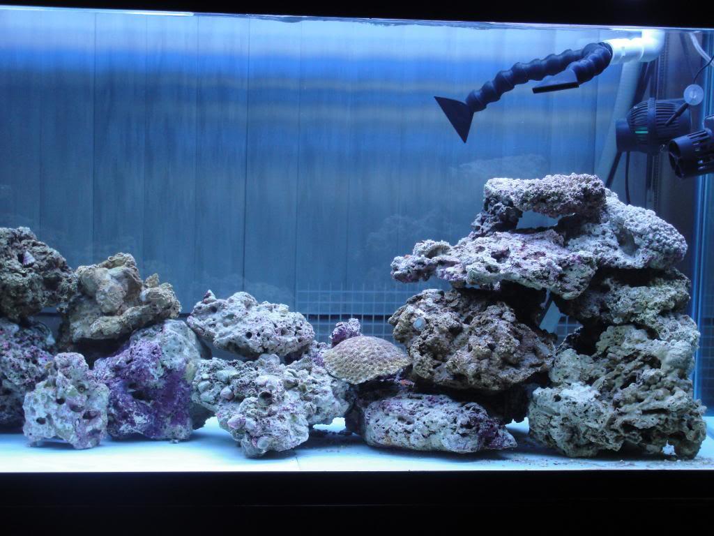 135 Gallon saltwater tank - Page 2 DSC00944