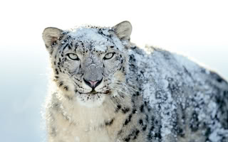 Biju and Biju rules Apple-snow-leopard-wallpapers-outed-24