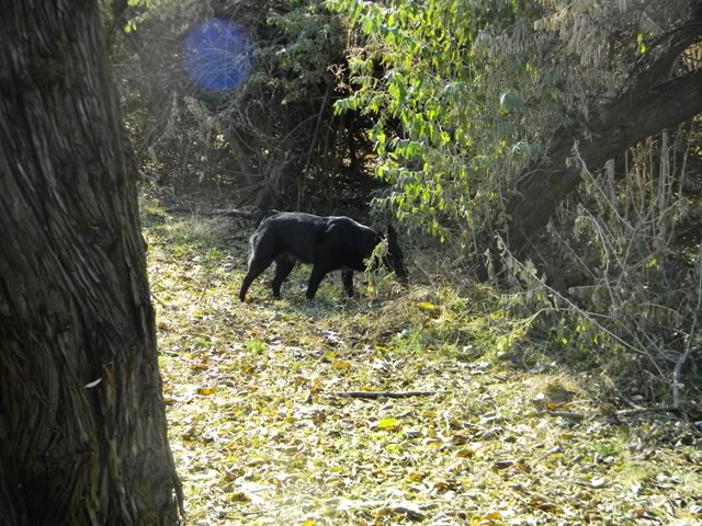 Found the Trestle - aka Hollow Woods Ride 11LuckyPeakRide009
