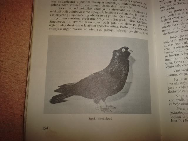 SRPSKI VISOKO LETAC ISTORIJAT - Page 2 P121210_17580001