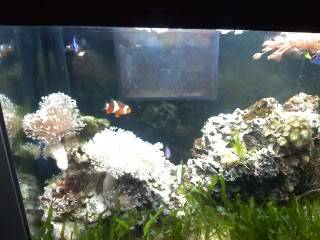 18 gallon reef tank pictures 1104091645