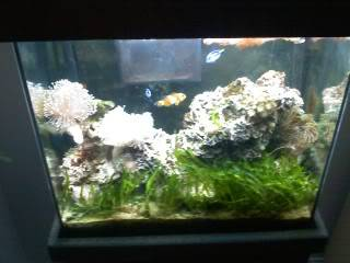 18 gallon reef tank pictures 1104091645a