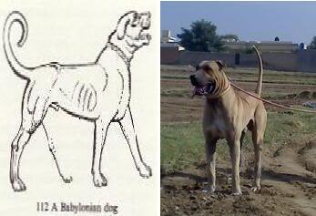 Происхождение домашней собаки и классификация пород - Страница 2 BKcomparison