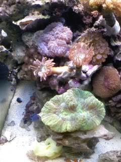 50 gal reef tank re-aquascape Newfrontshot