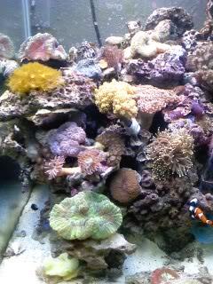 50 gal reef tank re-aquascape Newtank