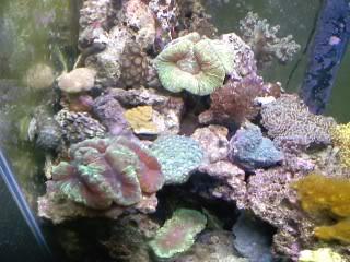 50 gal reef tank re-aquascape Newtopshot