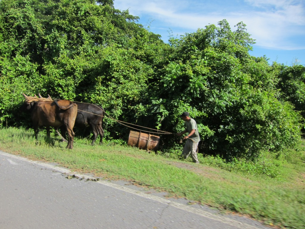 O vara comunista: Cuba si Venezuela. IMG_1630