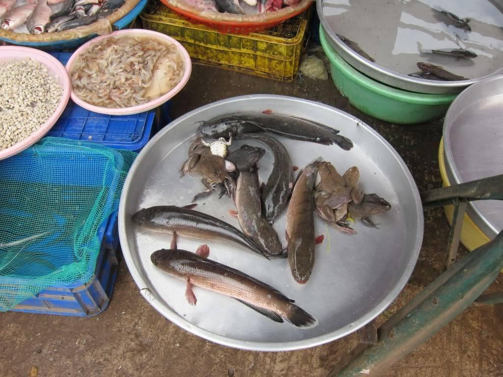 Sudul Vietnamului de revelion 2011/2012: OTP-KBP-SGN cu Aerosvit! IMG_2284