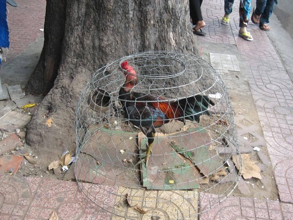 Sudul Vietnamului de revelion 2011/2012: OTP-KBP-SGN cu Aerosvit! Image040