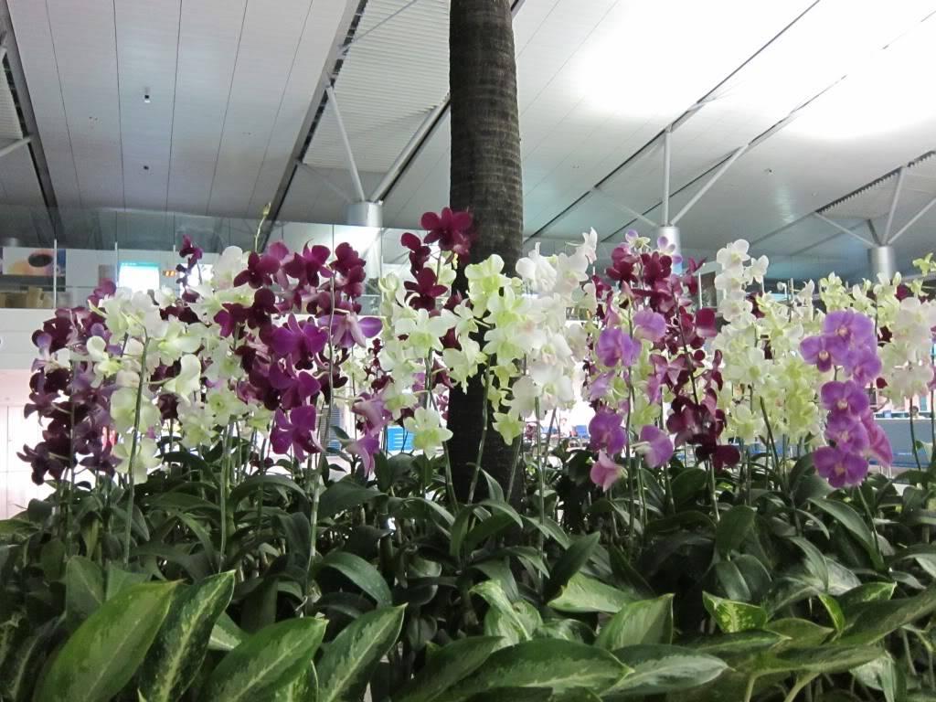 Sudul Vietnamului de revelion 2011/2012: OTP-KBP-SGN cu Aerosvit! Image077