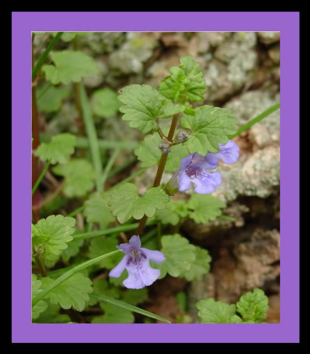 Spring flower pictures. DSC04233-1-1