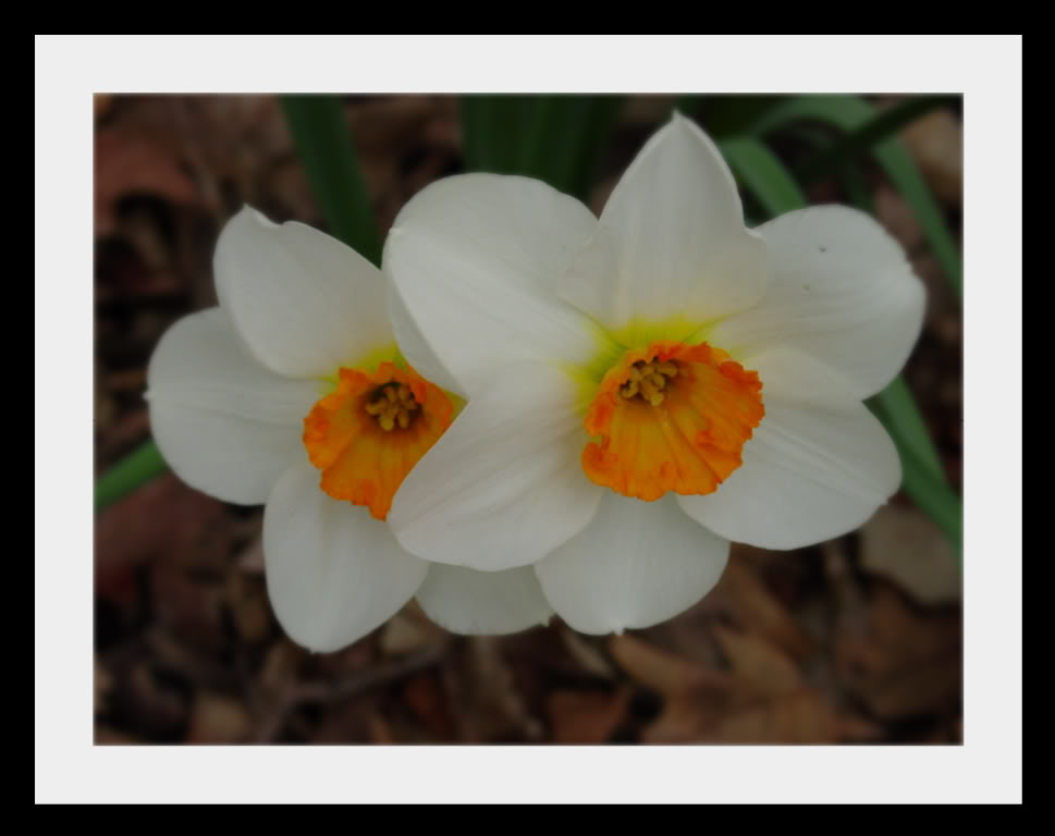 Spring flower pictures. DSC04635-1