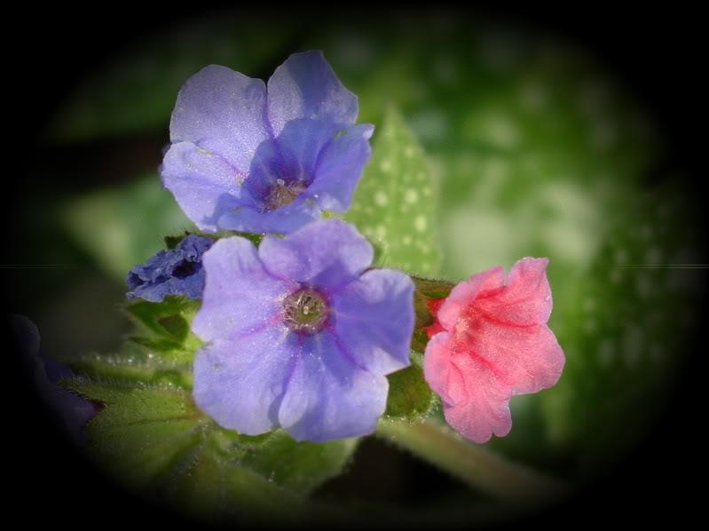 Spring flower pictures. DSC04653-2