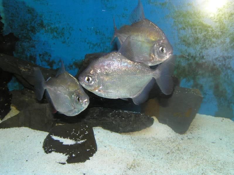 Mis 2 acuarios PA280068
