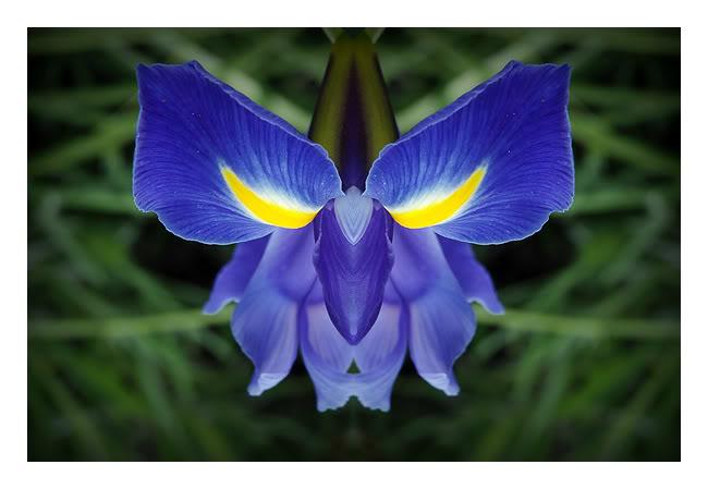 زهور جميله جداَ... 4483669-lg