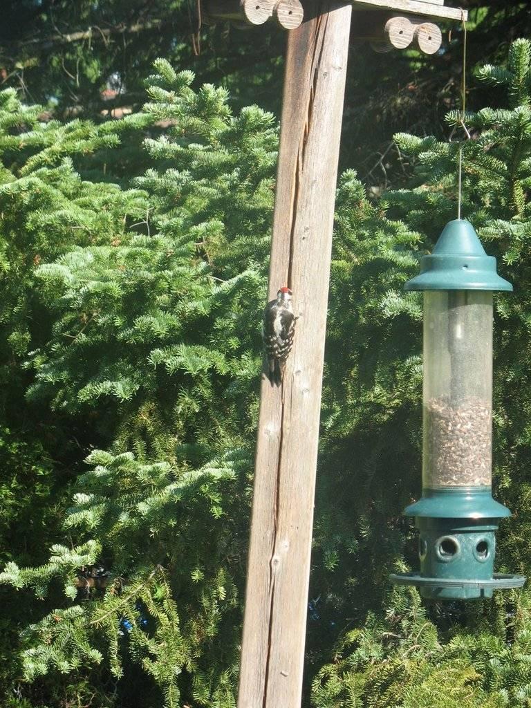 Birds of the Garden IMG_2076_zpswkabhxdp