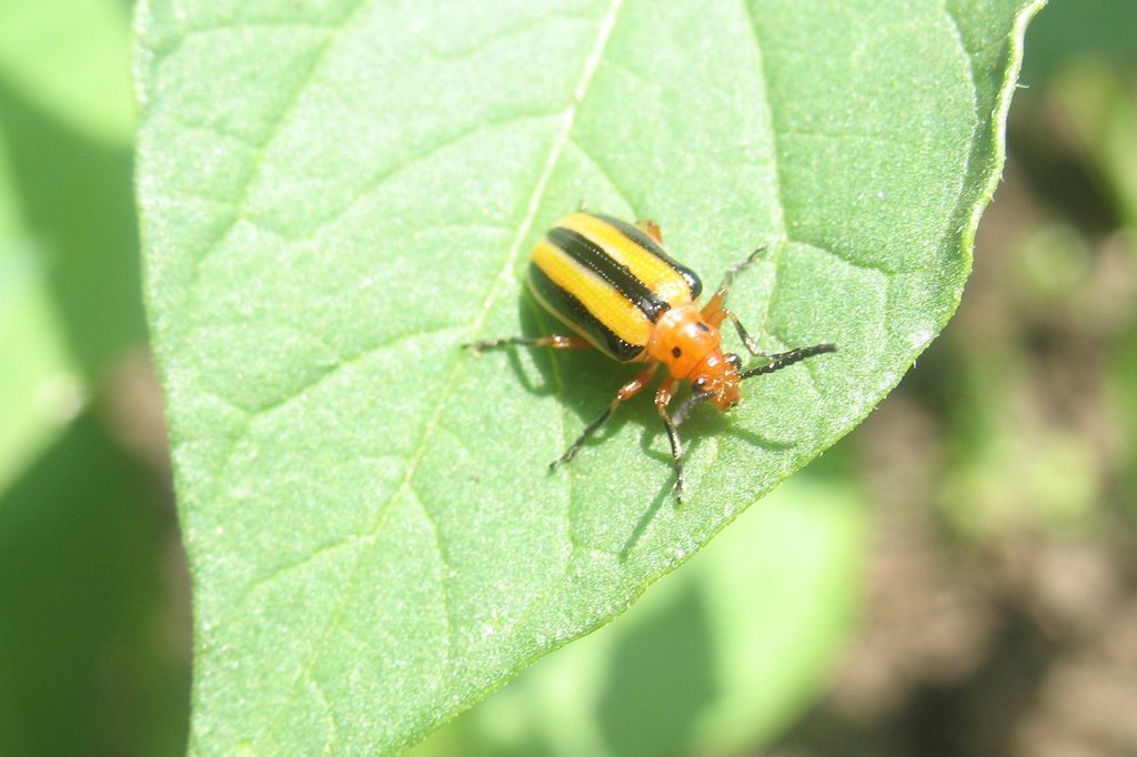 Helpful Beetles IMG_2112-001_zpsoavkcvu7