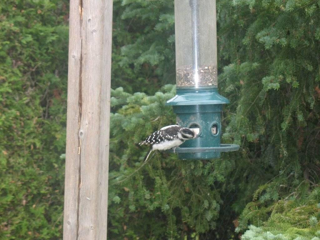 Birds of the Garden IMG_2155_zpspb1jz0mh